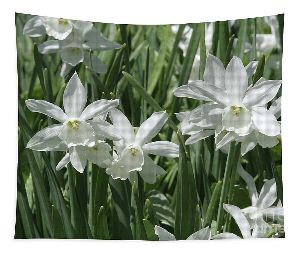 White Daffodils Tapestry featuring the photograph White Daffodils by Judy Whitton