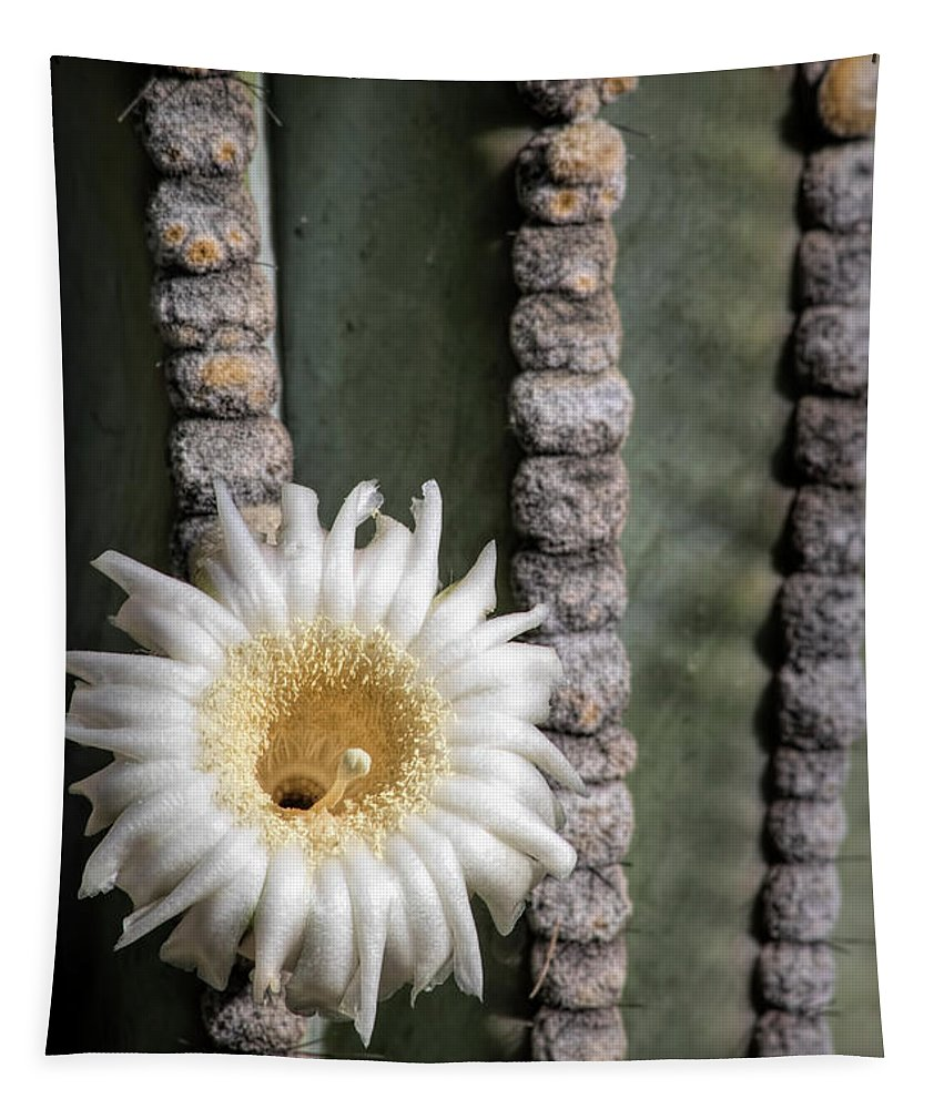 Saguaro Flower Tapestry featuring the photograph White Desert Jewel by Elisabeth Lucas
