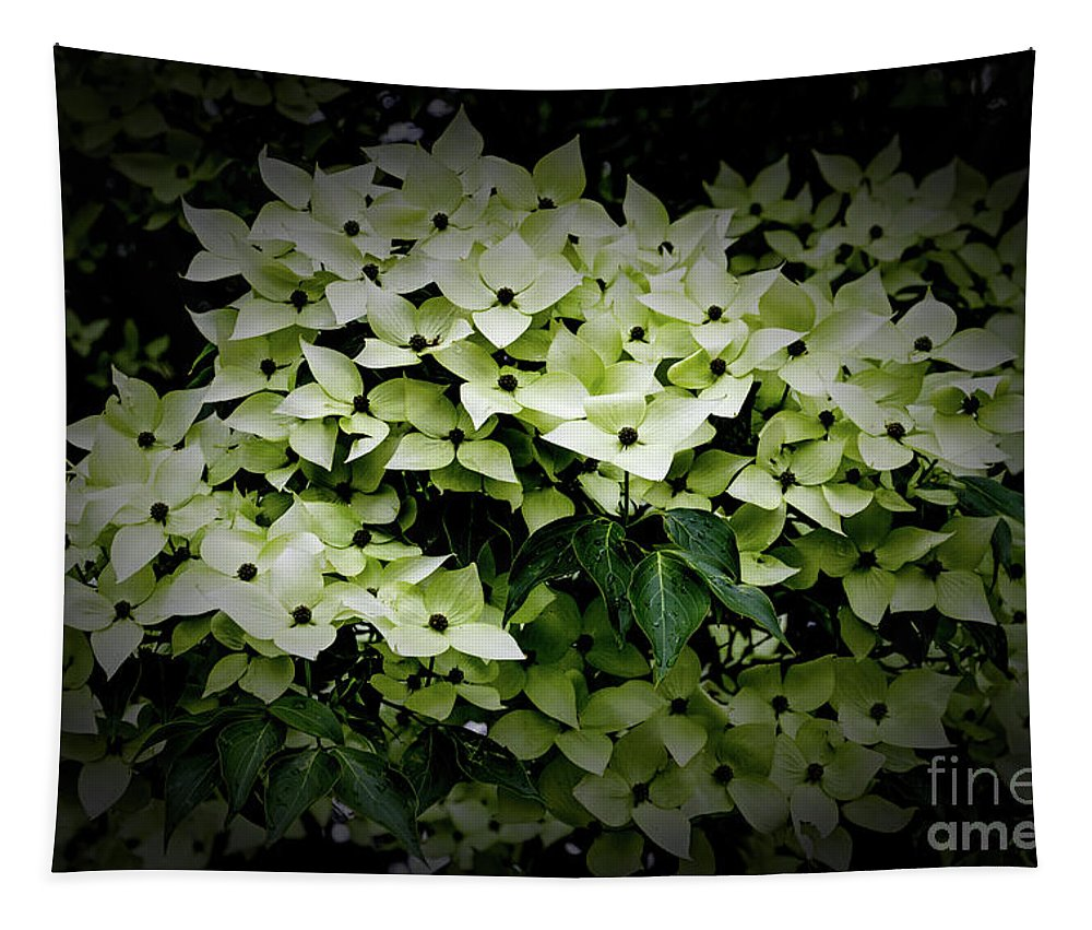 White Dogwood Tapestry featuring the photograph White Dogwood by William Norton