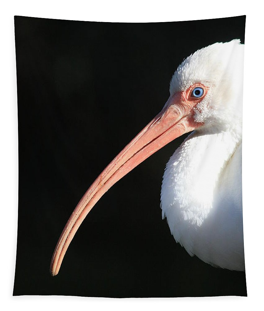 White Ibis Tapestry featuring the photograph White Ibis Profile by Carol Groenen