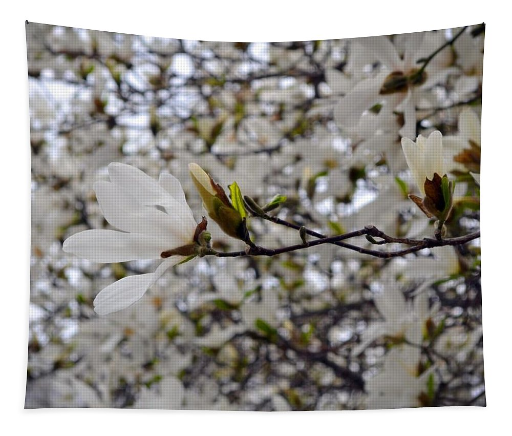 Tulip Tree Tapestry featuring the photograph White Magnolia by Michelle Calkins