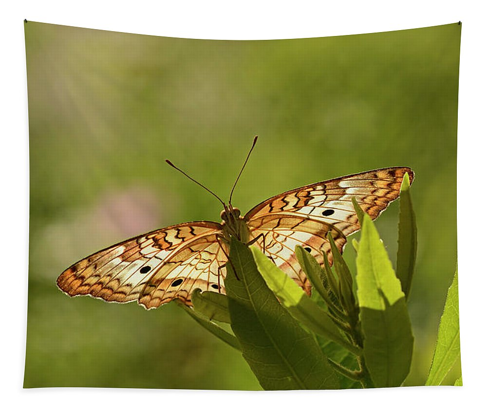 Anartia Tapestry featuring the photograph White Peacock Butterfly by Marv Vandehey