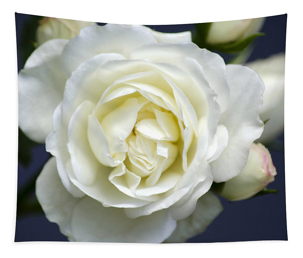 Rose Tapestry featuring the photograph White Rose Bloom by Christina Rollo
