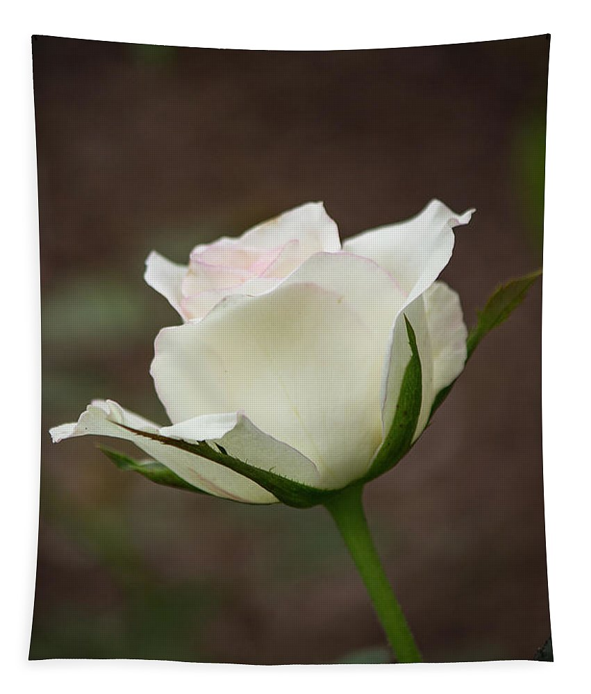 Florida Tapestry featuring the photograph White Rose Bud 2 by Teresa Wilson