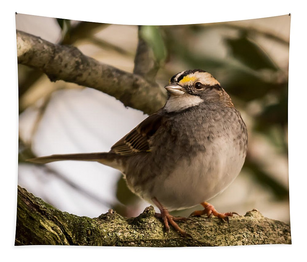 Terry D Photography Tapestry featuring the photograph White Throated Sparrow On Branch New Jersey by Terry DeLuco