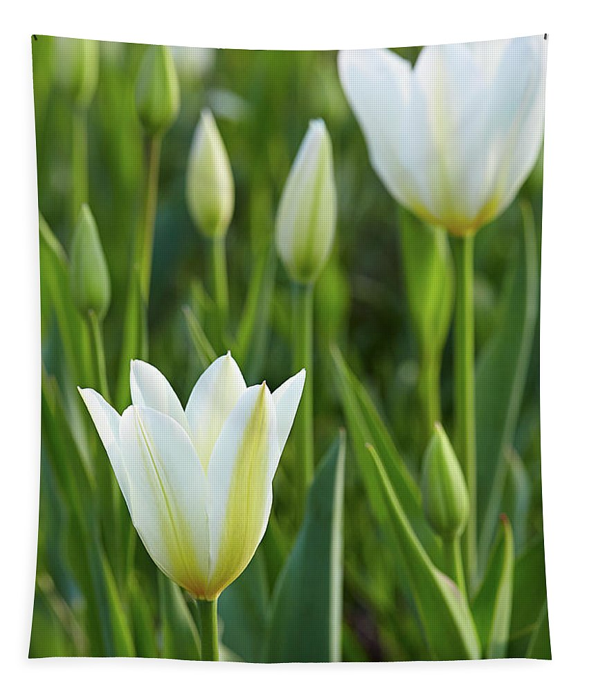Garden Tapestry featuring the photograph White Tulip by Garden Gate magazine