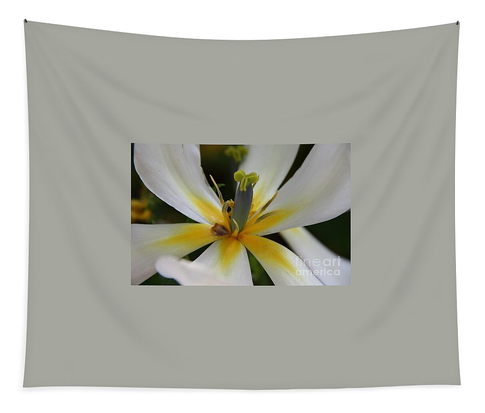 White Tlips Tapestry featuring the photograph White Tulip by Jolanta Anna Karolska