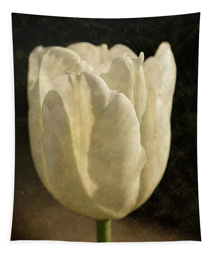 White Tulips Tapestry featuring the photograph White Tulip With Texture by Steve Purnell