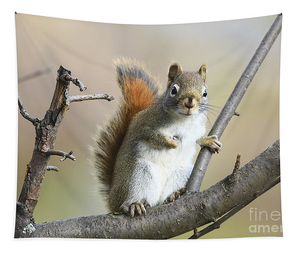 Squirrel Tapestry featuring the photograph Who Me by Deborah Benoit
