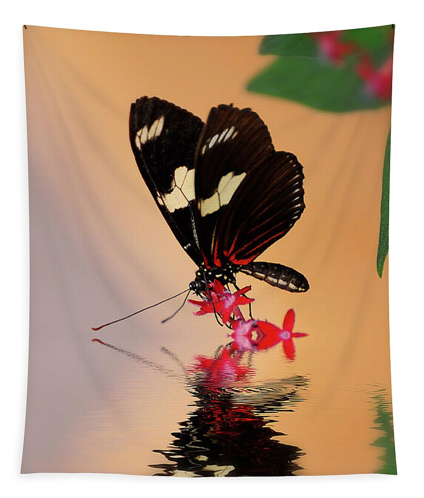 Butterfly Tapestry featuring the photograph Who's A Pretty Boy by Lois Bryan