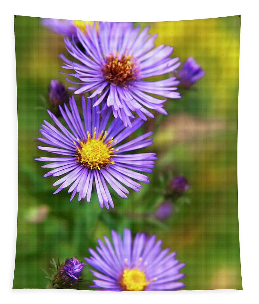 Wildflower Tapestry featuring the photograph Wild Aster Trio by Christina Rollo