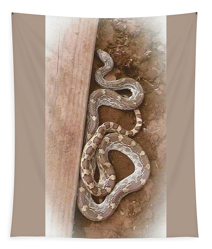 Animal Tapestry featuring the photograph Wild Friendly Gopher Snake by Judy Kennedy