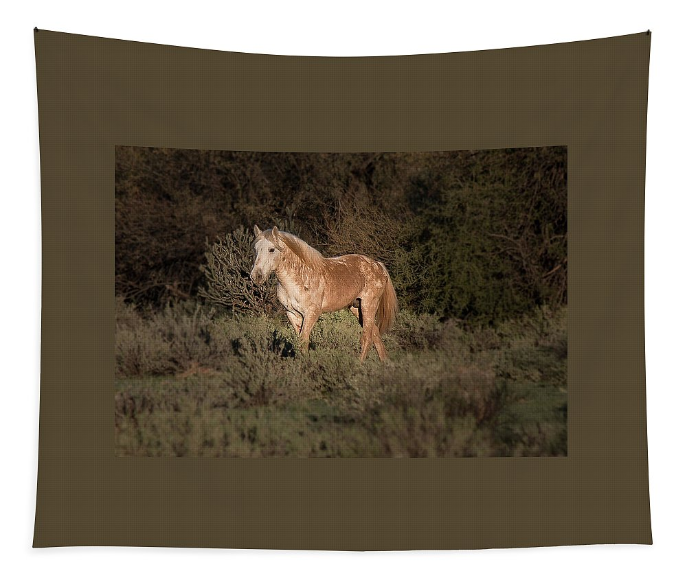 Horses Tapestry featuring the photograph Wild Horse At Sunset by Teresa Wilson