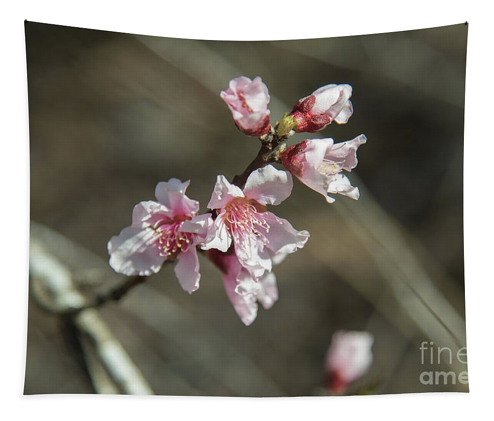 Wild Mountain Blossom Tapestry featuring the photograph Wild Mountain Blossoms by Anita Faye