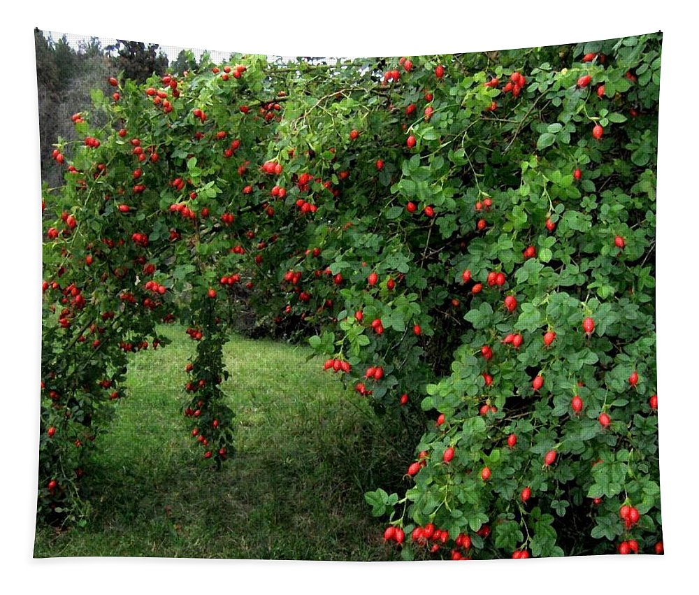 Wild Rosehips Tapestry featuring the photograph Wild Rosehips by Will Borden