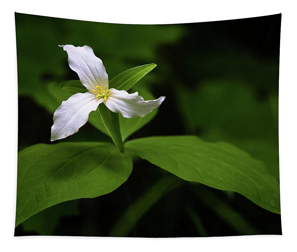 Trillium Tapestry featuring the photograph Wild White Trillium by Penny Meyers