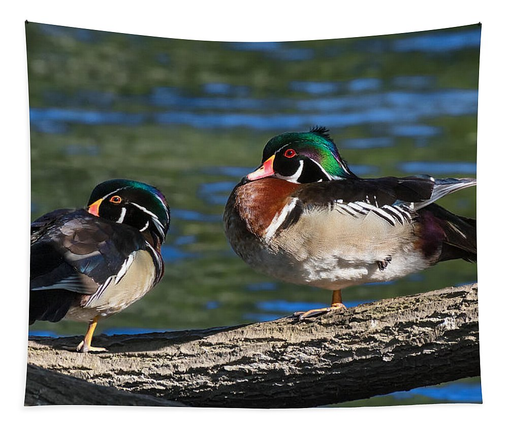 Wood Duck Tapestry featuring the photograph Wild Wood Ducks On A Log by Kathleen Bishop