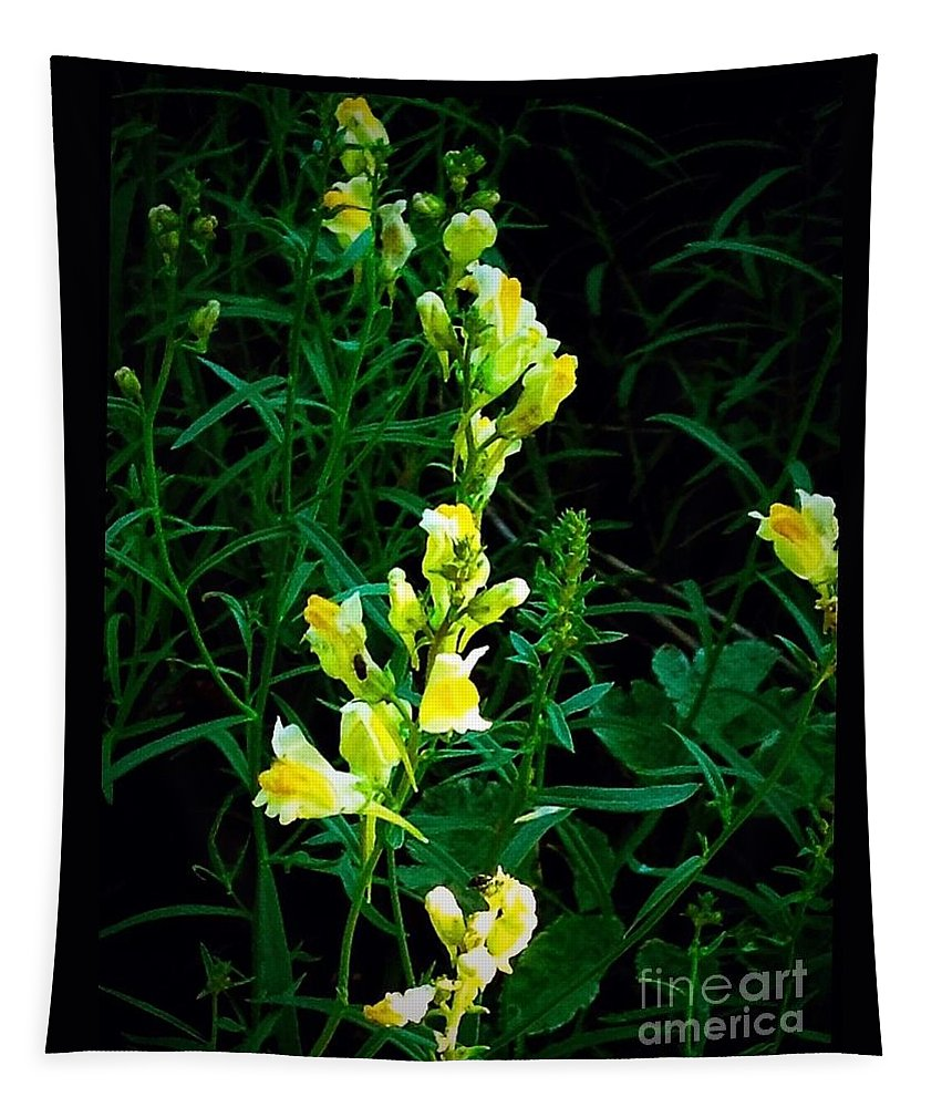 Yellow Tapestry featuring the photograph Wild Yellow Flowers On Black Background by Debra Lynch