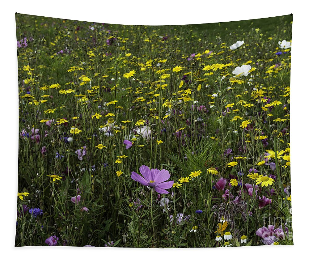 Wildflower Tapestry featuring the photograph Wildflower Surprise by Steve Purnell