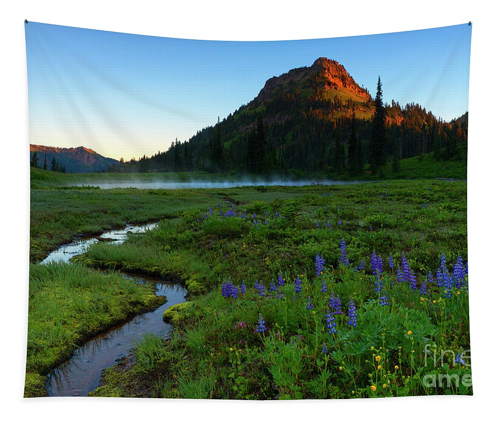 Lupine Tapestry featuring the photograph Winding Toward The Light by Mike Dawson