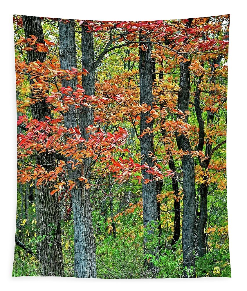 Autumn Tapestry featuring the photograph Windy Day Autumn Colors by Frozen in Time Fine Art Photography
