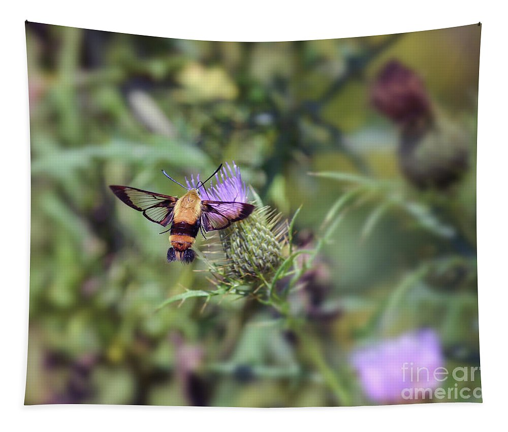 Hummingbird Moth Tapestry featuring the photograph Wings You Can See Through by Kerri Farley