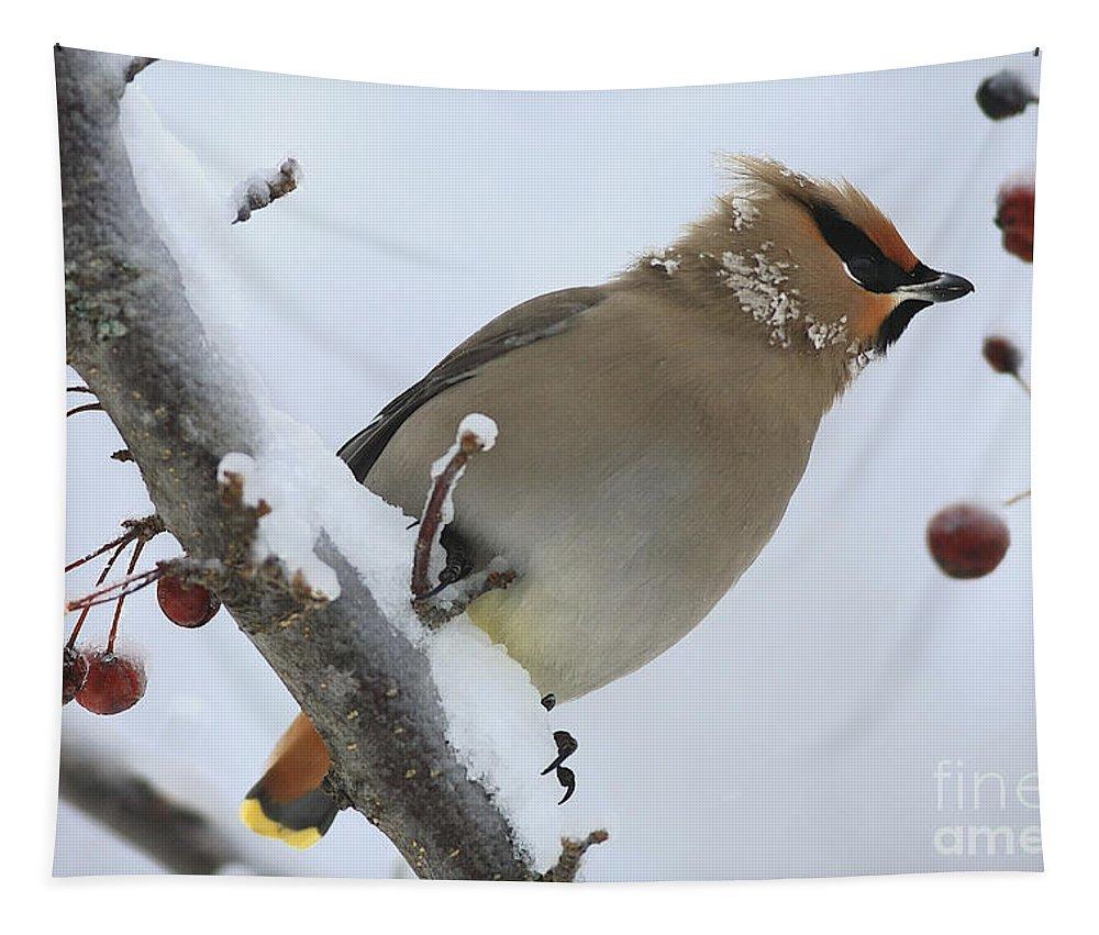 Bird Tapestry featuring the photograph Winter Berry Treat by Deborah Benoit
