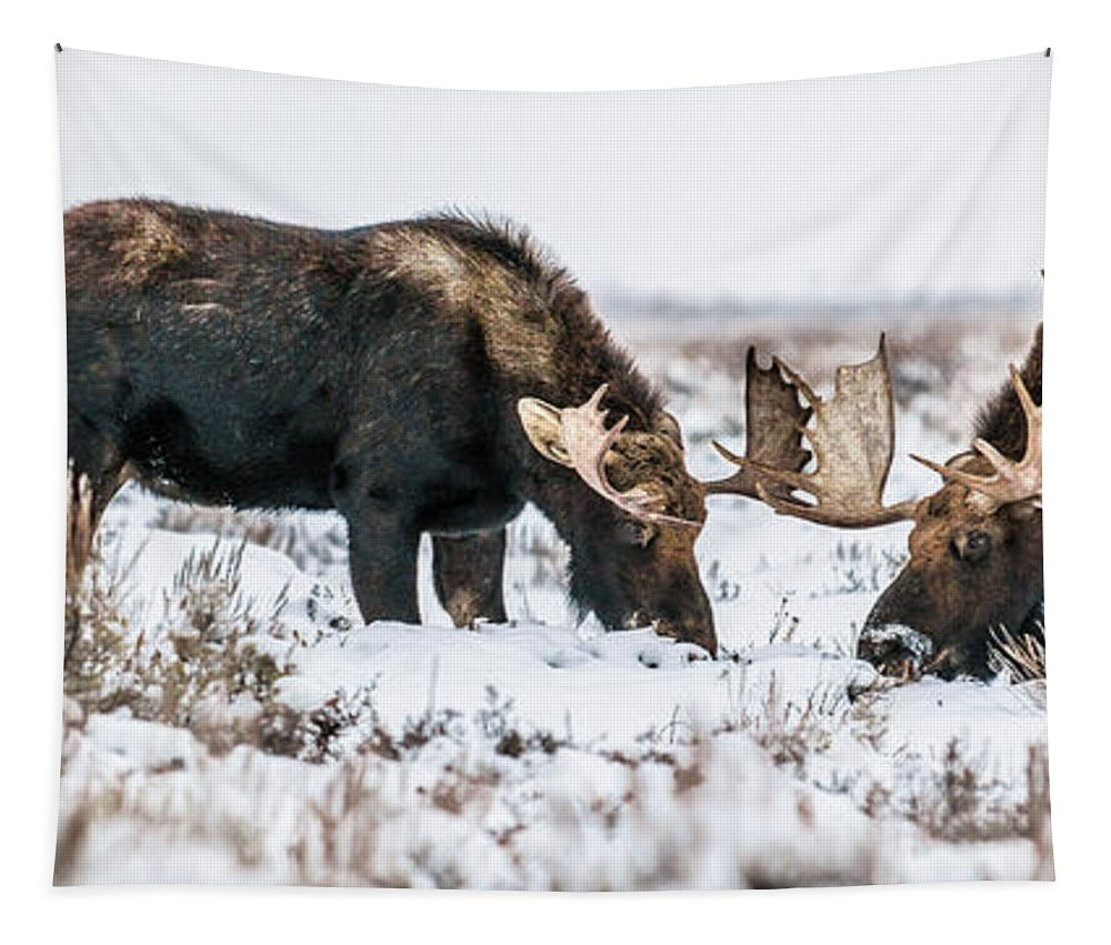 Moose Tapestry featuring the photograph Winter Buddies by Yeates Photography
