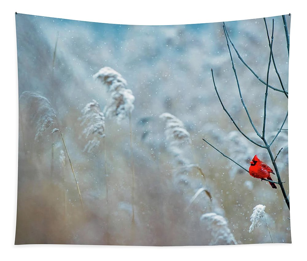 Cardinal Tapestry featuring the photograph Winter Cardinal by Ray Hennessey