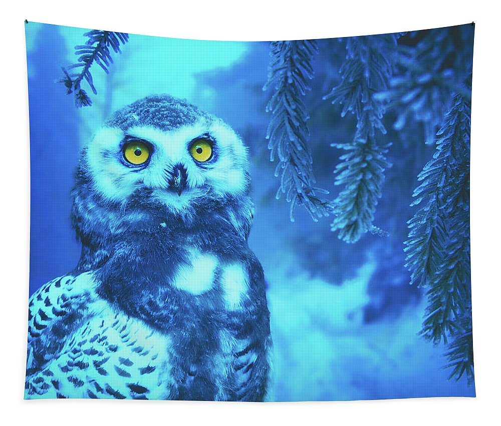 Owl Tapestry featuring the photograph Winter Owl by Pixabay