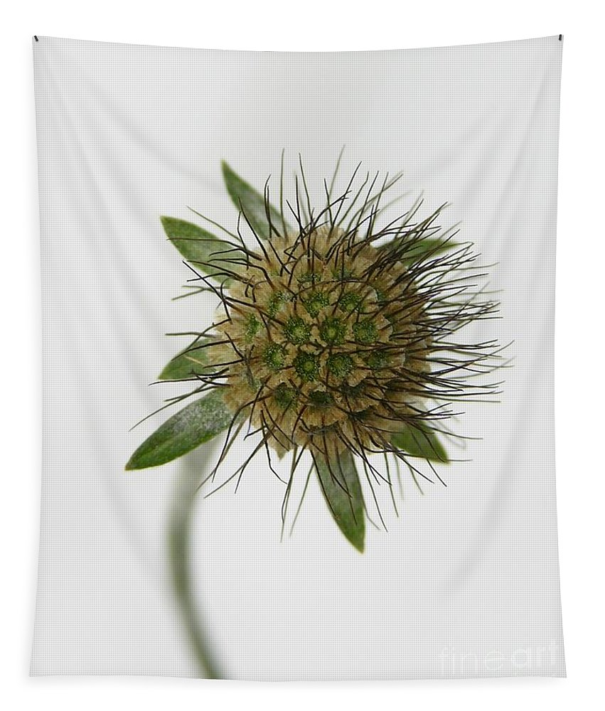 Nature Tapestry featuring the photograph Winter Pincushion Plant by Carol Groenen