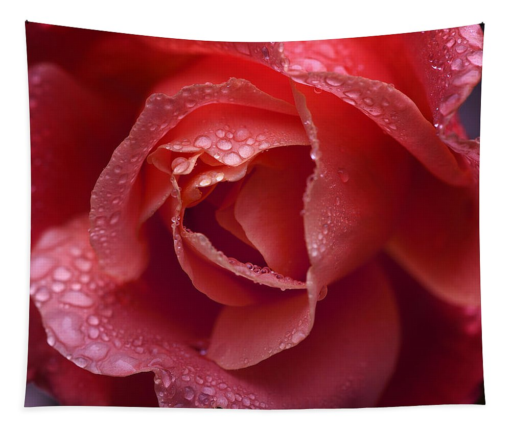 Rose Tapestry featuring the photograph Winter Rose Two by Stephen Anderson