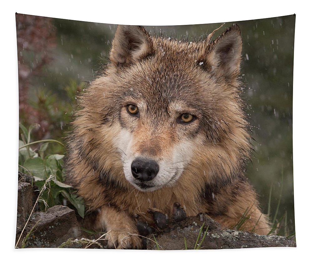 Wolf Tapestry featuring the photograph Wolf Face by Jerry Fornarotto