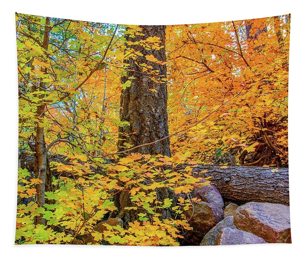 Workman Creek Tapestry featuring the photograph Workman Creek Maples by Daniel Dean