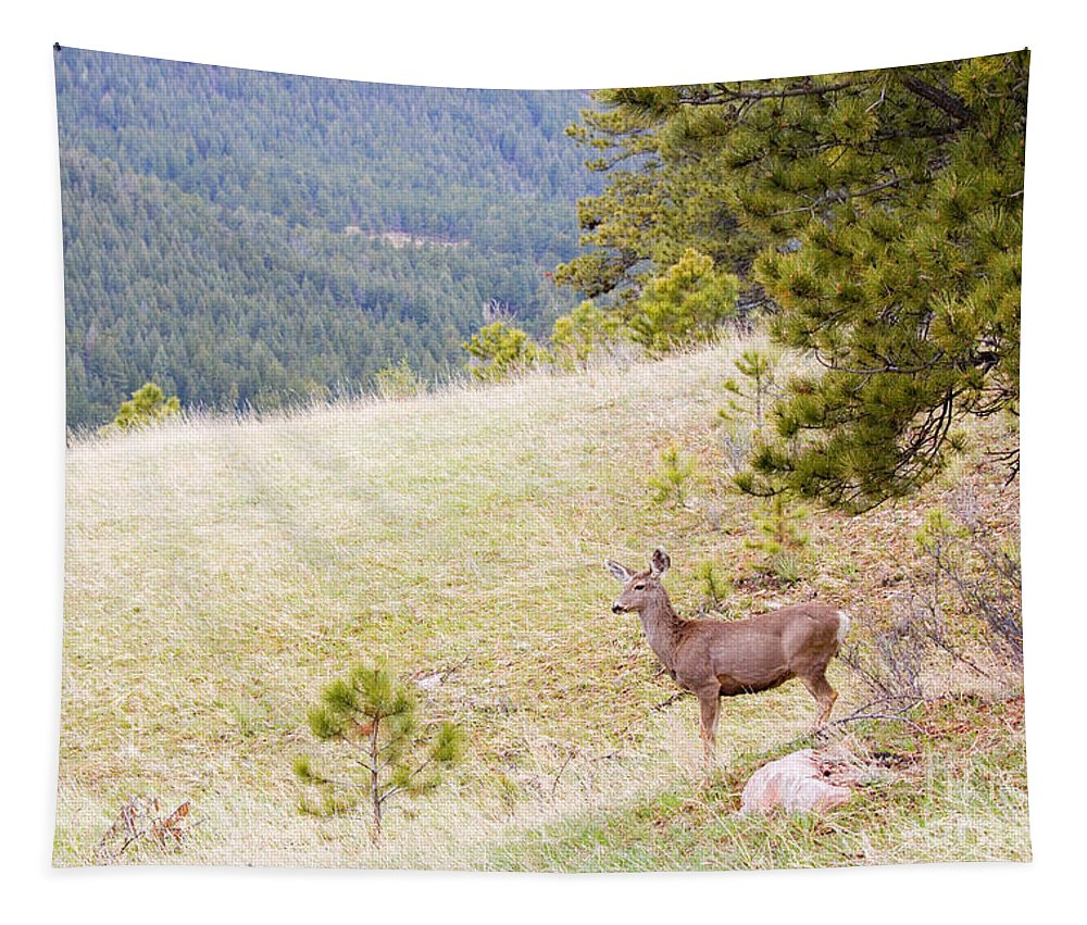 Deer Tapestry featuring the photograph Yearling Mule Deer In The Pike National Forest by Steve Krull