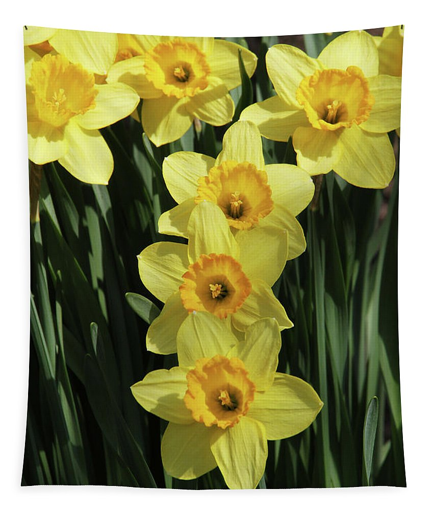 Daffodil Tapestry featuring the photograph Yellow And Orange Daffodil #2 by Judy Whitton