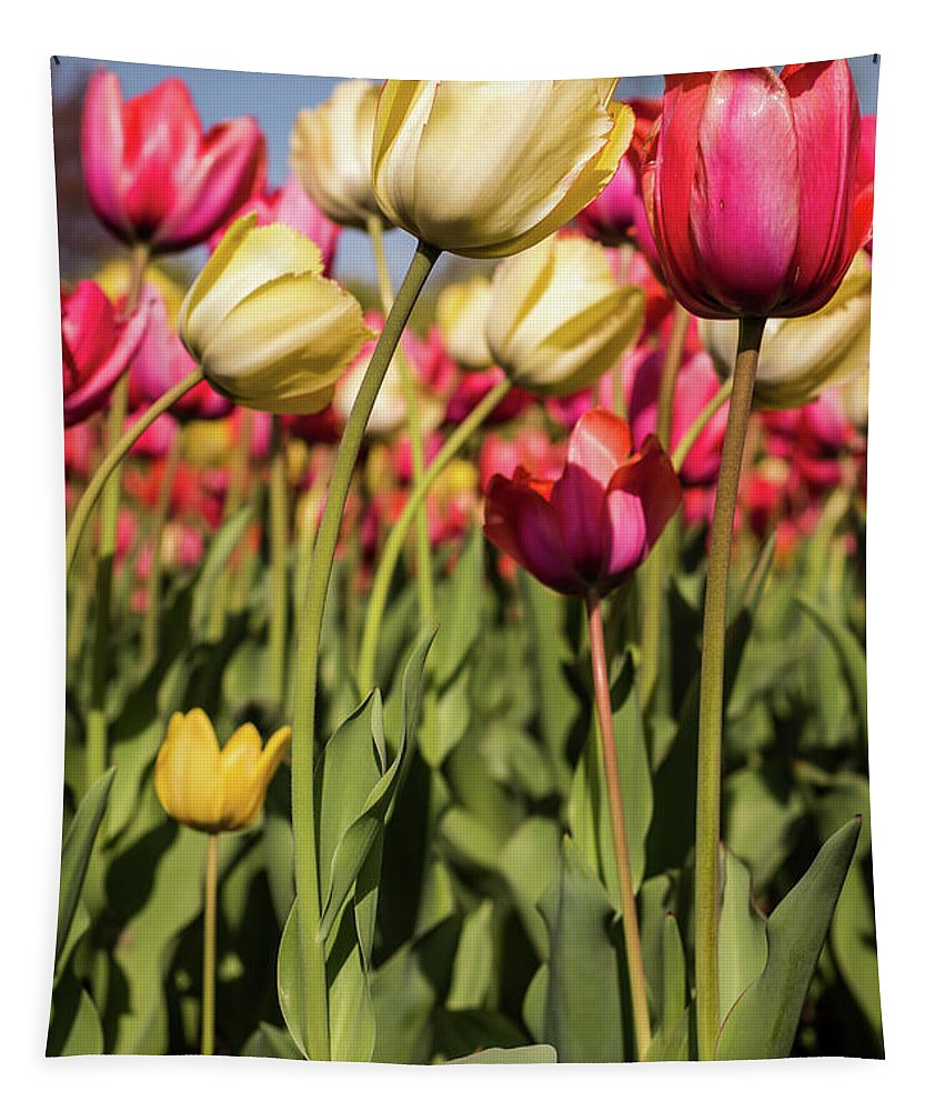 Terry D Photography Tapestry featuring the photograph Yellow And Pink Tulips V 2018 by Terry DeLuco