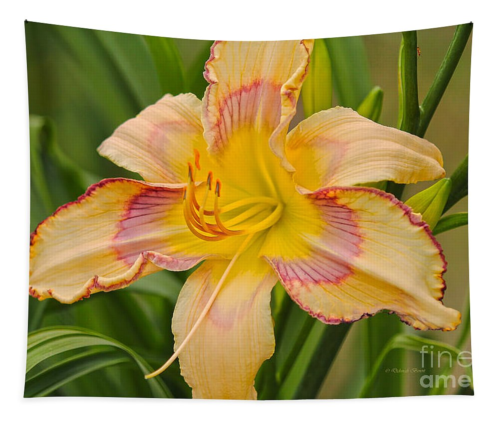 Deborah Benoit Tapestry featuring the photograph Yellow And Red Lily by Deborah Benoit