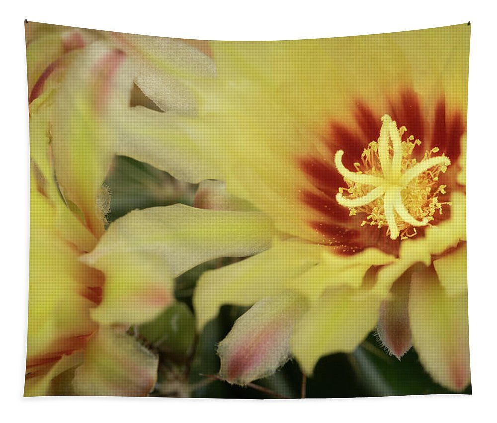 Cactus Tapestry featuring the photograph Yellow Cactus Plant Flower by Michalakis Ppalis
