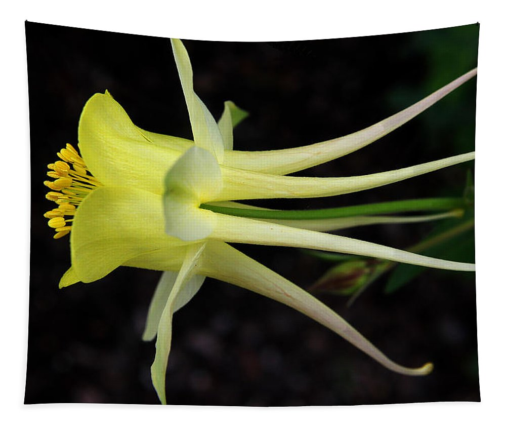 Aquilegia Tapestry featuring the photograph Yellow Columbine 2 by Judy Vincent