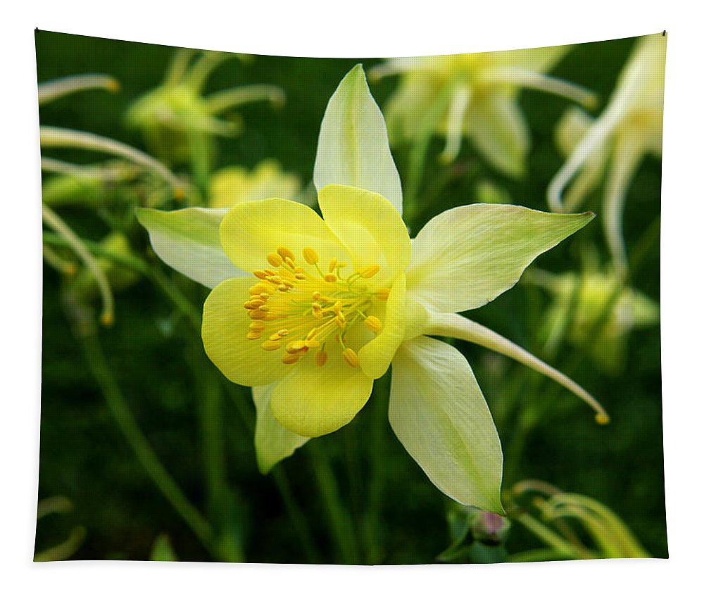 Columbine Tapestry featuring the photograph Yellow Columbine 3 by Judy Vincent