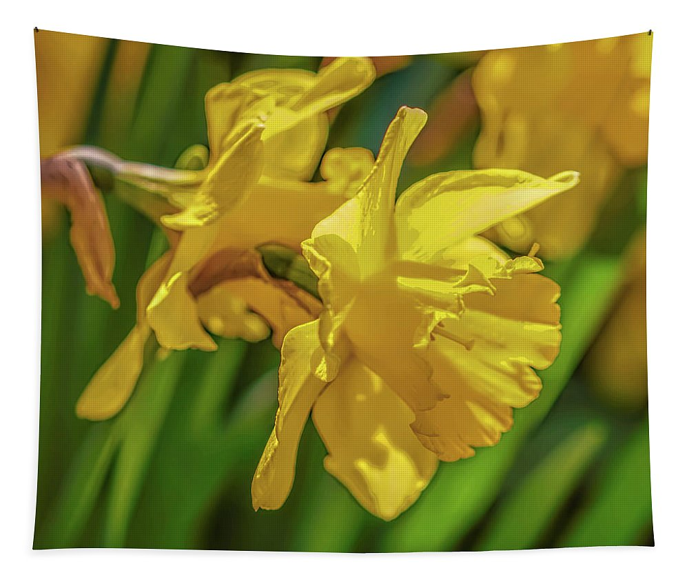 Narcissus Pseudonarcissus Tapestry featuring the photograph Yellow Daffodil May 2016. by Leif Sohlman