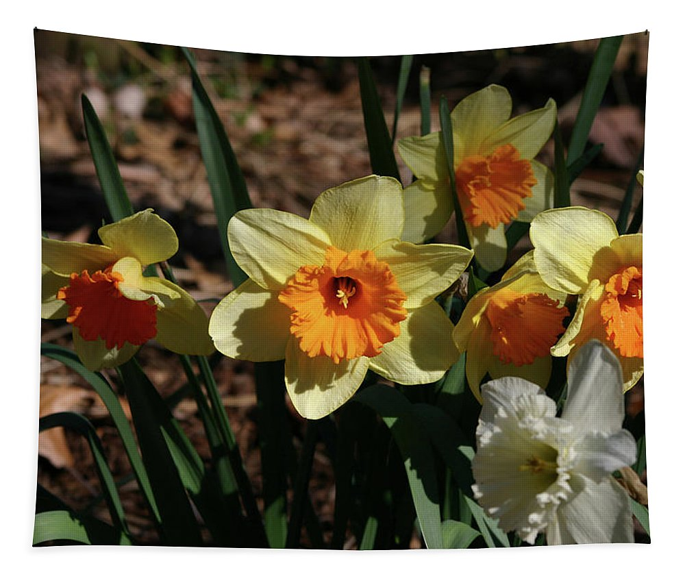 Flowers Tapestry featuring the photograph Yellow Daffodil by Michael Munster