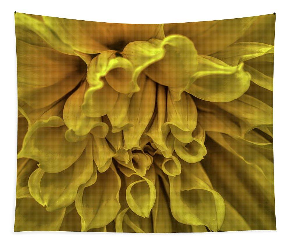 Dale Kauzlaric Tapestry featuring the photograph Yellow Dinner Plate Dahlia by Dale Kauzlaric