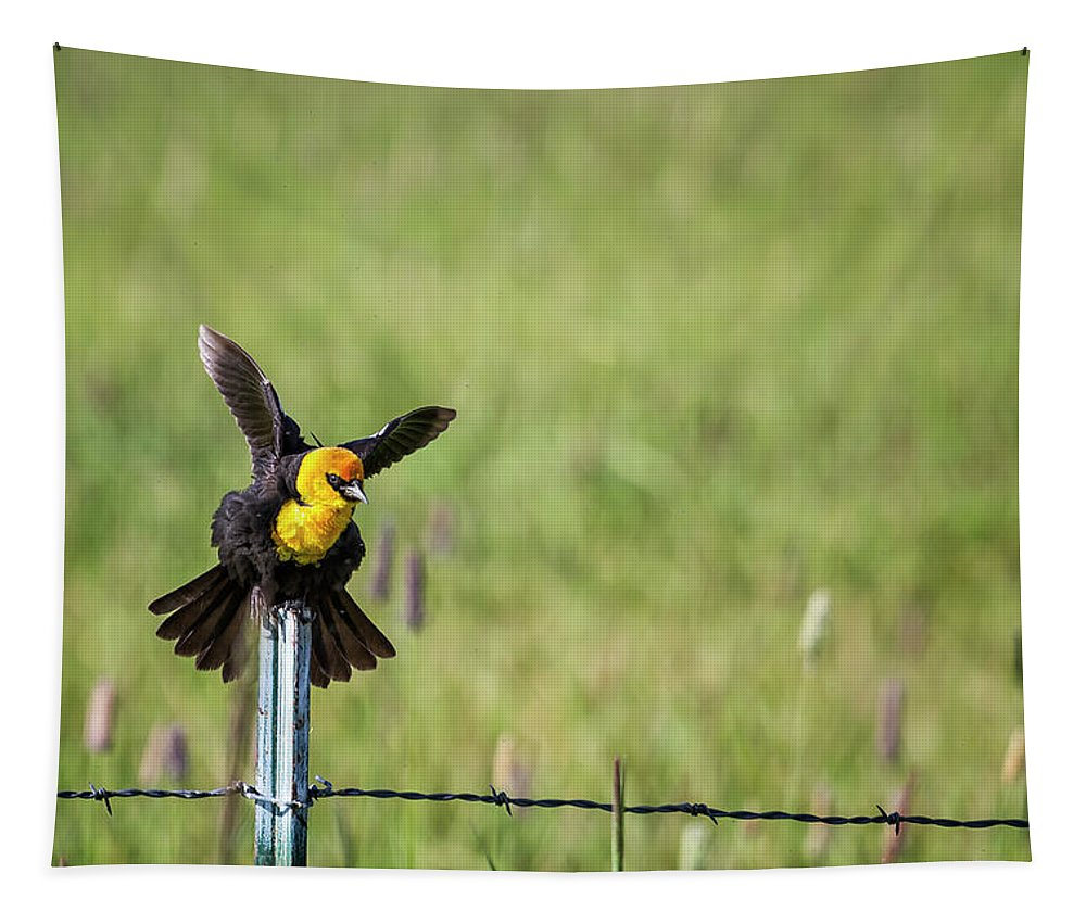 Yellow-headed Blackbird Tapestry featuring the photograph Yellow-headed Blackbird Balancing Act by Belinda Greb