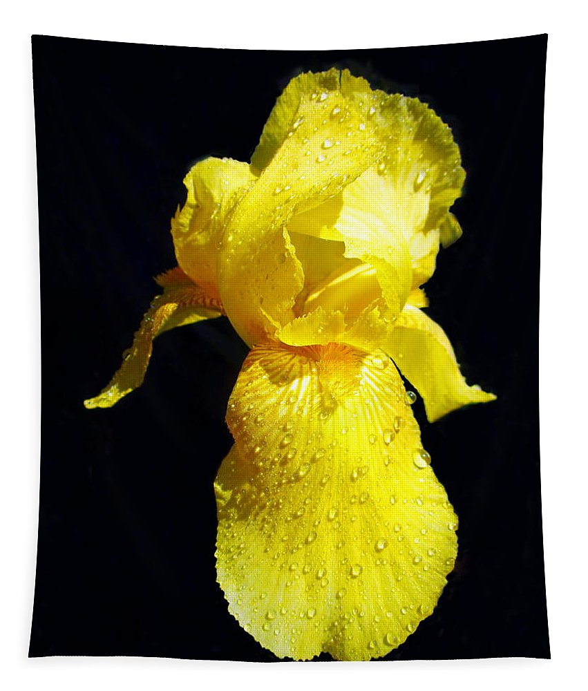 Iris Tapestry featuring the photograph Yellow Iris After The Rain by Joyce Dickens