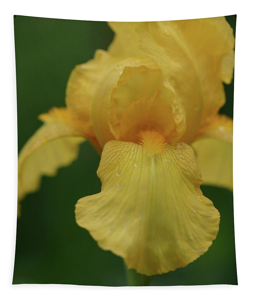 Iris Tapestry featuring the photograph Yellow Iris by Michael Munster