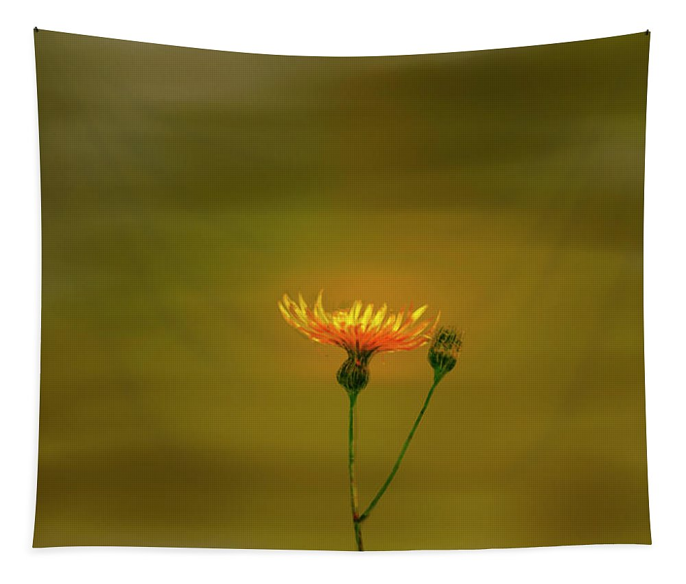 Yellow Petals Tapestry featuring the photograph Yellow Light #9. by Leif Sohlman