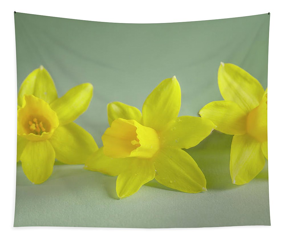 Yellow Mini Narcissus Tapestry featuring the photograph Yellow Mini Narcissus by Iris Richardson