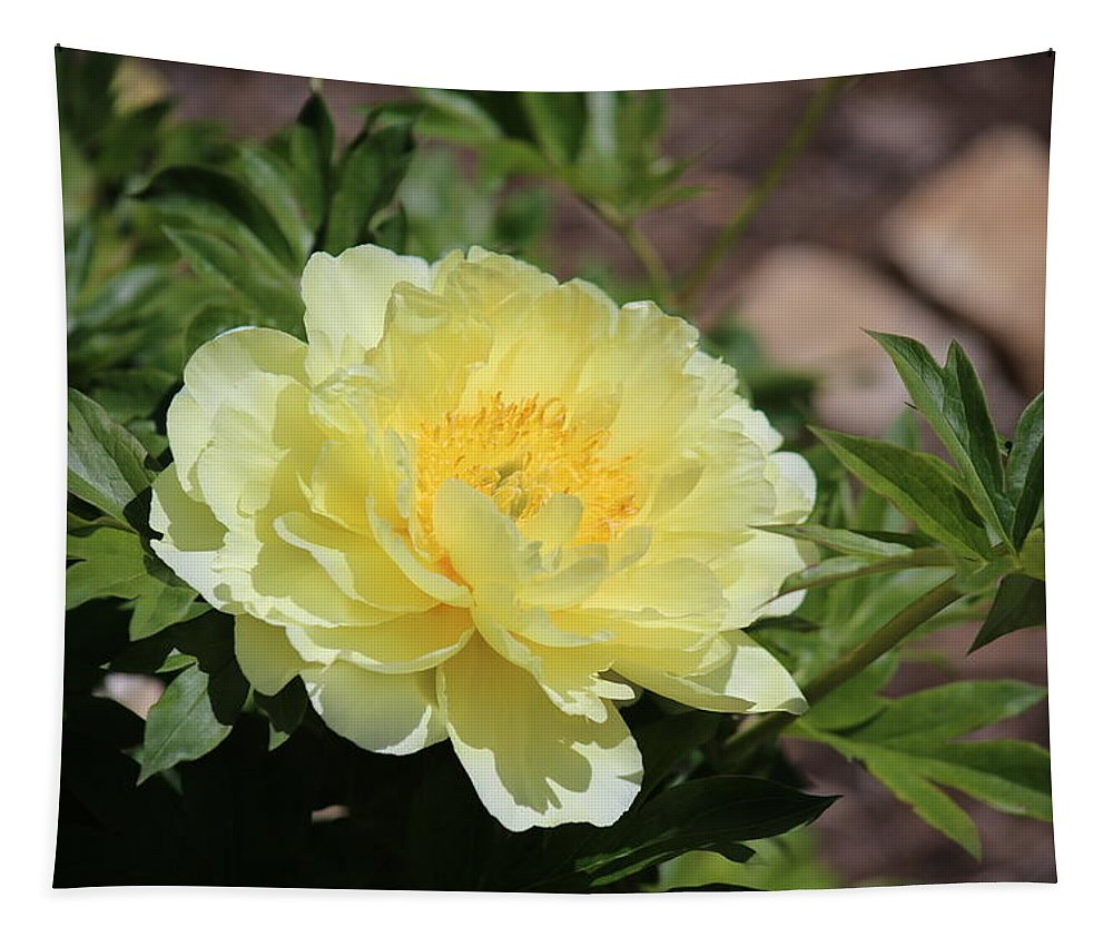 Flowers Tapestry featuring the photograph Yellow Peony by Michael Munster